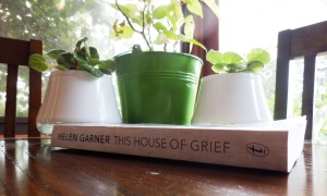 Spine of book in front of pot plants